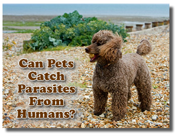 Can You Get Parasites FROM Pets And Can Parasites Be Passed TO Pets?