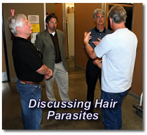 discussing hair parasites
