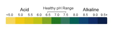 pH balance in the body