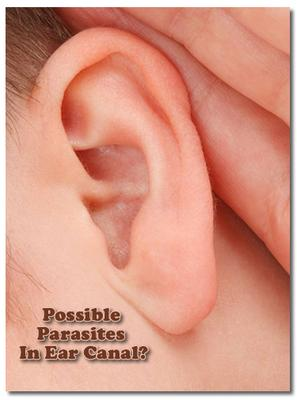 Dealing With Possible Parasites In Ear Canal