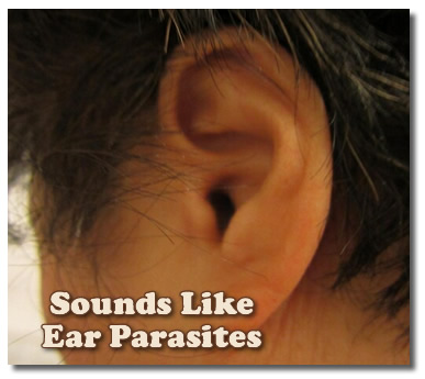 Beach Ear Parasite Caught At South Father Island