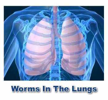 Worried About Worms In The Lungs...