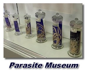 picture of parasite types