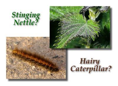 Could it be you came in contact with a hairy caterpillar or stinging nettle plant?